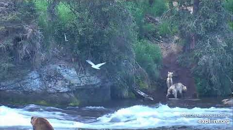07.03.2018 - 435 Holly and Cubs Visit the Falls by Brenda D