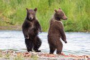 803's 2 spring cubs July 17, 2020 photo by Lee Pastewka (aka RiverPA) .06