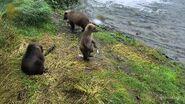 128 Grazer's 3 spring cubs 2016 snapshot by KimBear17 .01