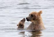 435 and spring cub Jul 17, 2020 photo by Lee Pastewka (aka RiverPA) .01
