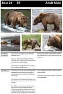 BB 24 INFO 2014 BoBr PAGE 53