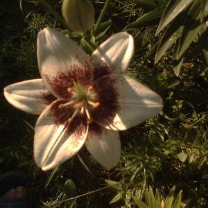 Еммануил-цветок (квадрат).jpg