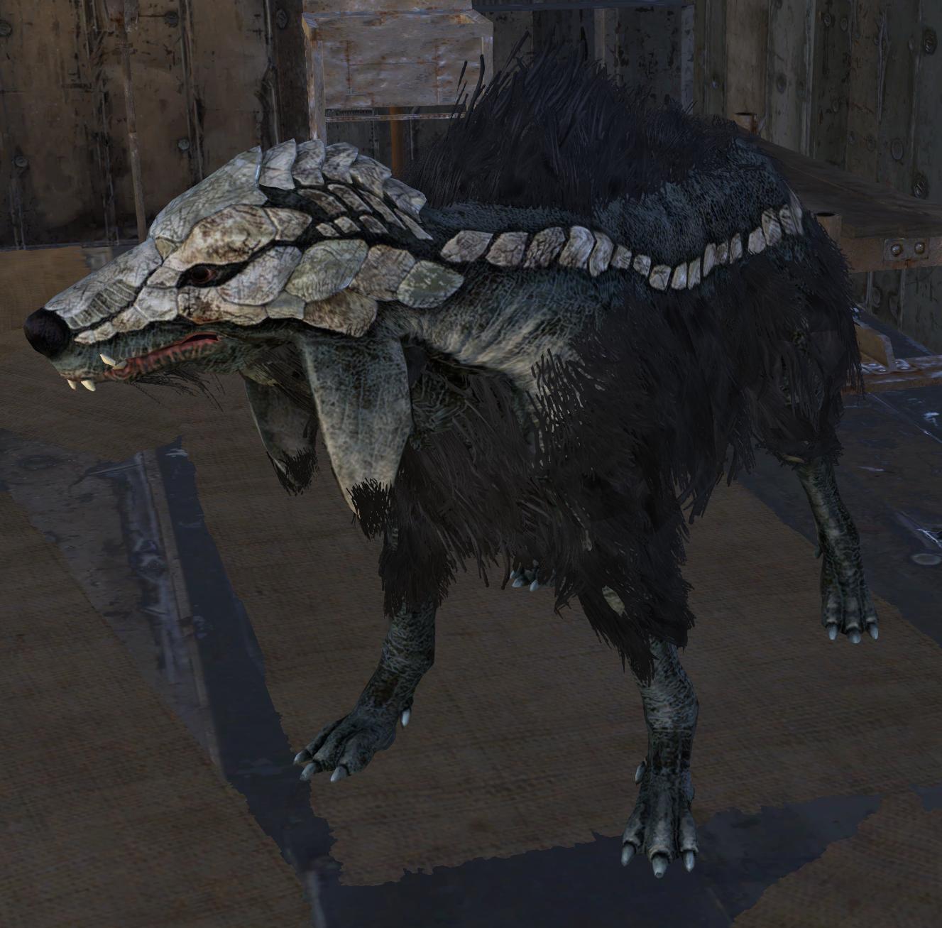 Settler's Pup