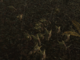 Swamp Raptor Nest