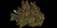 Old Riceweed