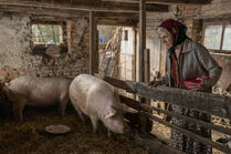3x04-52 Dasha Milena body pigs