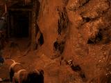 Пещерный гриб