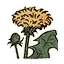 Icon herb dandelion.png