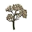 Icon herb valerian.png