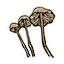 Icon cave mushroom.png
