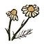 Icon herb chamomile.png