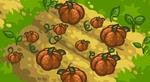 Scn Pumpkins.PNG