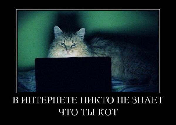 Internet Cat.jpg