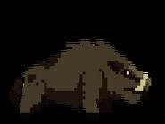 Boar SH