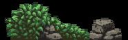 Boar bush Europe