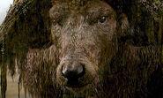 Sker buffalo tn