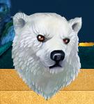 Белая-медведица.png
