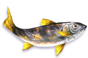 Speckled Trout (Sen III).png
