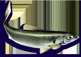 List of fish (Cold Steel III)