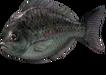 Great Blackfish (Sky SC).png
