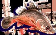 Red Perch (Sen III).png