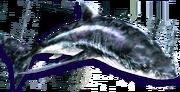 Hide Shark (Sen III).png