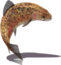 Rainbow Trout (Sky SC).png
