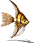 Gold Angelfish (Sky SC).png