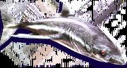 Phantom Shark (Sen III).png