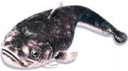 Marble Snakehead (Sen IV).png