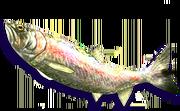 Rainbow Trout (Sen III).png