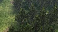 Le Locle - Saint-Croix Forest 5 (SC)