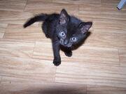 Süße Katze.jpg