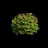 Shrub-Small bush