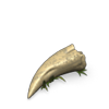Dragon Tooth (Item)