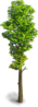 Tree-Summer tree