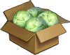 Cabbage Crops.png