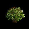Shrub-Large bush 2