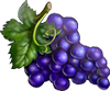 Grape seeds.png