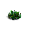 Grass-Small fern 2