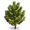 Tree-Wild pear tree