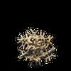 White Coral (Item)