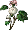 Cotton Seeds.png