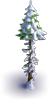 Tree-Snowy dry fir-tree