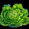 Lettuce Seeds.png