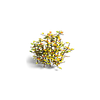 Grass-Autumn brushwood 2