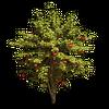 Tree-Wild apple tree
