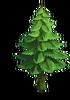 Tree-Small spruce