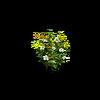 Grass-Jasmine 1