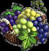 Grape Crops.png